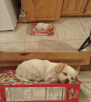 Jesus, Target, and Tumblr: that-flighty-temptress-adventure:  sHES TOO LITTLE TO EVEN DENT THE FREAKING EMPTY FRUIT LOOPS BOX BY SLEEPING ON TOP OF IT SHE IS 1 POUND OF PURE FLUFF JESUS CHRIST MY HEART CAN'T TAKE IT
