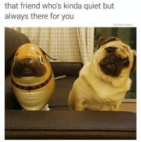 Life, Memes, and Quiet: that friend who's kinda quiet but  always there for you  @chaos reigns what you know about that pug life? 👉 @chaos.reigns_ (follows appreciated!)