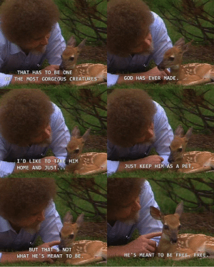 The spirit of Bob Ross will never die.: THAT HAS TO BE ONE  GOD HAS EVER MADE.  OF THE MOST GORGEOUS CREATURES  I'D LIKE TO TAKE HIM  JUST KEEP HIM AS A PET,  HOME AND JUST.  BUT THAT S NOT  WHAT HE'S MEANT TO BE  HE'S MEANT TO BE FREE FREE. The spirit of Bob Ross will never die.