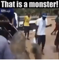 That is a monster!  LiveLeak