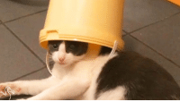 Kitties, Memes, and 🤖: That is one rambunctious kitty cat! :-)
