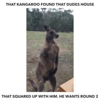 He's ready for round two!: THAT KANGAROO FOUND THAT DUDES HOUSE  THAT SQUARED UP WITH HIM. HE WANTS ROUND 2 He's ready for round two!