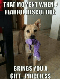 rescue dogs: THAT MOMENT WHEN A  FEARFUL RESCUE DOG  BRINGS YOU A  GIFT PRICELESS