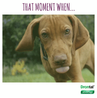 Love, Memes, and Work: THAT MOMENT WHEN  tal  advantage That moment when you get home from work and your four-legged friend is overjoyed to see you...  Who else is in love with Murphy the dog from our TV advert? 🐶 #theinseparables