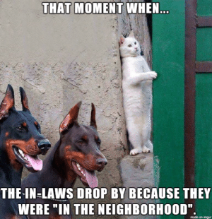 """Love, Meme, and Too Much: THAT MOMENT WHEN  THE-IN-LAWS DROP BY BECAUSE THEY  WERE IN THE NEIGHBORHOOD""""  made on imgur Can I propose a new meme? I just love this picture too much"""