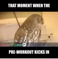 Gym, Link, and The Link: THAT MOMENT WHEN THE  mame  PRE-WORKOUT KICKS IN That moment. . @DOYOUEVEN 👈🏼 10% OFF STOREWIDE (use code DYE10 ✔️ tap the link in our BIO 🎉