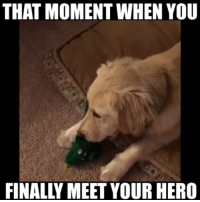 Dreams come true! Dog can't believe his eyes when her favorite chew toy comes to life....: THAT MOMENT WHEN YOU  FINALY MEET YOUR HERO Dreams come true! Dog can't believe his eyes when her favorite chew toy comes to life....