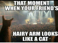 Friends, Memes, and 🤖: THAT MOMENT  WHEN YOUR FRIEND'S  HAIRY ARM LOOKS  LIKE A CAT