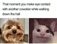 Funny, Hello, and Another: That moment you make eye contact  with another cowoker while walking  down the hall Oh hello there