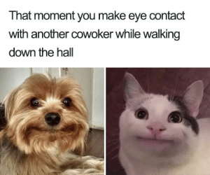Meme, Reddit, and Another: That moment you make eye contact  with another cowoker while walking  down the hall Oh hi there mark not my meme