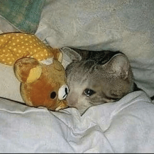that moment you realize all your hoodies are in the washing machine and you slowly die in bed waiting for them to be done: that moment you realize all your hoodies are in the washing machine and you slowly die in bed waiting for them to be done