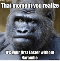 Easter, Meme, and Memes: That moment you realize  its  your first Easter without  Harambe.  Make a Meme