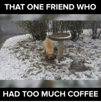 Memes, 🤖, and That-One-Friend: THAT ONE FRIEND WHO  HAD TOO MUCH COFFEE drink up! #itsviral