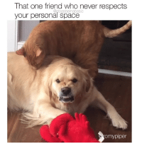 God, Memes, and Space: That one friend who never respects  your personal space  @dogsbeingbasic  omypipe Dear god Jen out of my face! (tag that friend) Via @romypiper