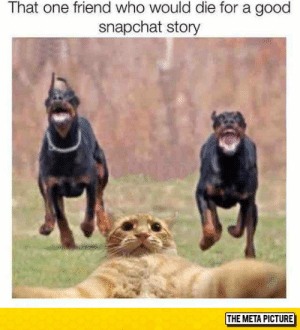 Snapchat, Tumblr, and Blog: That one friend who would die for a good  snapchat story  THE META PICTURE lolzandtrollz:  We All Know Someone Like This