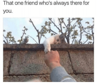 Funny, One, and Friend: That one friend who's always there for  you Tag this buddy 💕
