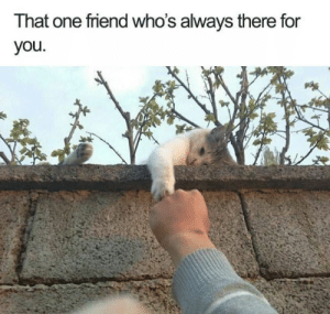 The Sunday scaries are no match for memes! #Memes #Cats #Animals: That one friend who's always there for  you The Sunday scaries are no match for memes! #Memes #Cats #Animals