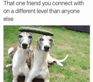 https://t.co/5ym70xqN2t: That one friend you connect with  on a different level than anyone  else https://t.co/5ym70xqN2t