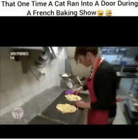 Memes, Time, and French: That One Time A Cat Ran Into A Door During  A French Baking show  MIDIPYRENEES Well now pussy's gotta do the walk of shame 😹 Possessed Flashback