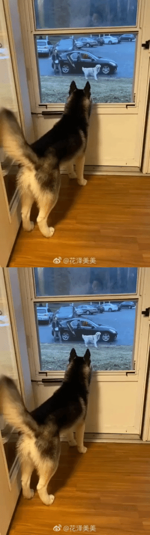 That tail droop when the doggo's date left (Source): That tail droop when the doggo's date left (Source)