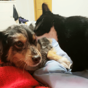 That time I finally managed to get a picture of my 12 yr old cat licking my 11 yr old dog, which always confuses the dog and she slowly moves away as if to be polite.: That time I finally managed to get a picture of my 12 yr old cat licking my 11 yr old dog, which always confuses the dog and she slowly moves away as if to be polite.