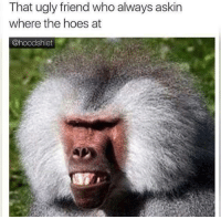 Hoes, Ugly, and The Hoes: That ugly friend who always askin  where the hoes at  @hoodshiet
