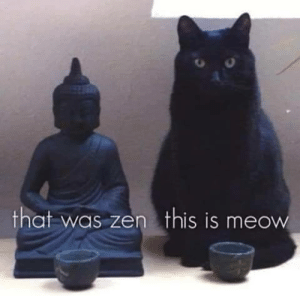 Very true!: that was zen this is meow Very true!