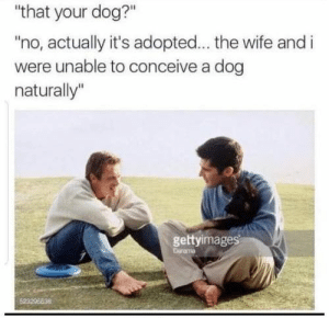 """Animals, Funny, and Memes: """"that your dog?""""  """"no, actually it's adopted... the wife and i  were unable to conceive a dog  naturally""""  gettyimages  Drama  52320E638 42 Funny Dog Memes That'll Make Your Day! - Lovely Animals World"""