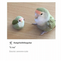 "Cute, Friends, and Memes: thatgirlwiththeguitar  ""It me""  Source: awwww-cute knit birb and real birb are best friends - Max textpost textposts"