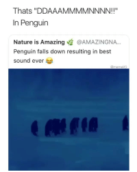 """Funny, Memes, and Best: Thats """"DDAAAMMMMNNNN!!""""  In Penguir  Nature is Amazing @AMAZINGNA..  Penguin falls down resulting in best  sound ever  @memelif3 drop @hilariousassvideos a follow for 2018 video memes 💯 they are private for a reason 😏 so follow quikk"""
