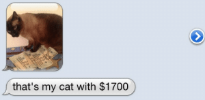 hanyoyokai:  hnnwnchstr: trainhardrunfast:  shaniae:  Reblog in 10 seconds and $1700 will come your way  I have nothing to lose and 1700$ to gain  yes please TwT Come to meeee 💸  💸  💸 💸      : that's my cat with $1700 hanyoyokai:  hnnwnchstr: trainhardrunfast:  shaniae:  Reblog in 10 seconds and $1700 will come your way  I have nothing to lose and 1700$ to gain  yes please TwT Come to meeee 💸  💸  💸 💸