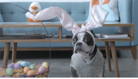 Bunnies, Dank, and Easter: That's no Easter Bunny. http://goo.gl/IjB02O