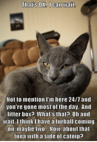 Memes, 🤖, and Box: That's OK I can wait  Not to mention I'm here 24/7 and  you're gone most of the day. And  litter box? IWhat's that? Oh and  Wait, I think I have a furball coming  on, maybe two. Now, about that  tuna with a side of catnip?
