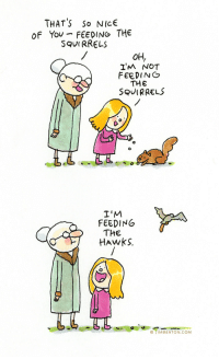 Yo, Hawks, and Kindness: THAT'S So NICE  OF Yo FEEDING THE  SQUIRRELs  OH,  I'M NOT  FEEDIN  THE  SQUIRRELS  I'M  FEEDING  THE  HAwkS.  ©丁IMBENTON.COM kindness to wildlife
