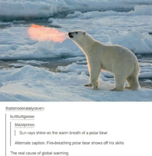 Fire, Global Warming, and Bear: thatsmoderatelyraven:  buttbuttgoose:  blazepress:  Sun rays shine on the warm breath of a polar bear.  Alternate caption: Fire-breathing polar bear shows off his skills  The real cause of global warming Global warming