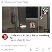 Dancing, Ironic, and New York: thatsmoderatelyraven Follow  NEW  YORK  POST  0:37  It's showtime for this pole-dancing subway.  NEW  YORK  rat  POST  New York Post 9K views  Source: tomfordvelvetorchid  102,542 notes