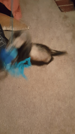 Tumblr, Blog, and Blue: thatweirdferretlady:  He likes the blue jellyfish