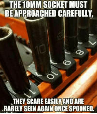 Just like that, it was gone: THE  10MM  SOCKET  MUST  BE APPROACHED CAREFULLY  pl  THEY SCARE EASILYANDARE  RARELY SEEN AGAINONCE SPOOKED. Just like that, it was gone