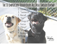 """Memes, Summer, and Focus: THE 1O IMPORTANT BEHAVIOURS ALLDOGS SHOULD KNOW!  L. Loose leash walking  2. """"Leave it!  3. Recall  Sit!  5 Drop it!  6. Focus  .Stay!""""  . """"Wail!  . Release  10.Polite Greetings  Calgary .  Humane  Society **20% OFF SELECT SUMMER BEHAVIOUR CLASSES**  4 weeks long coursed that will help set your pooch up for success!   Polite Pooches Around Town: Saturday, July 21 Walk Nicely: Sunday, July 15th & Saturday, July 21 Toto Recall: Sunday, July 15   Register Now: http://ow.ly/a6K530kWQh7"""