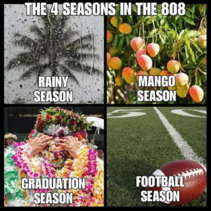Hawaiian Memes For The Homesick Part 02: THE 4 SEASONS IN THE 808  RAINY  SEASON  MANGO  SEASON  FOOTBALL  SEASON  GRADUATION  SEASON Hawaiian Memes For The Homesick Part 02
