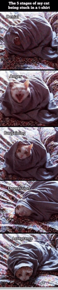 Depression, Cat, and Anger: The 5 stages of my cat  being stuck in a t-shirt  Anger  Bargaining  Depression  Acceptance First Dump!!!