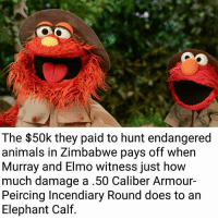 Elmo, Memes, and Hunting: The $50k they paid to hunt endangered  animals in Zimbabwe pays off when  Murray and Elmo witness just how  much damage a .50 Caliber Armour-  Peircing Incendiary Round does to an  Elephant Calf. Matter splatter.