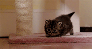 the-absolute-best-posts:I think we could all use a tiny kitten on our screens from time to time.: the-absolute-best-posts:I think we could all use a tiny kitten on our screens from time to time.