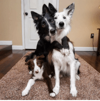 Adorable, Dog, and Trio: The Adorable dog TRiO
