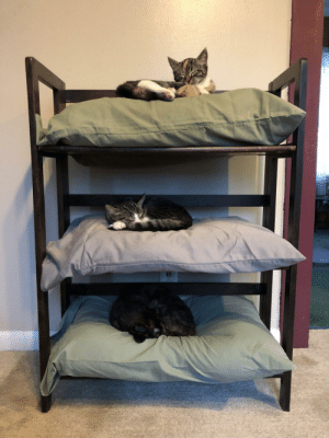 the-adventures-of-dave:  puppyrazzi:  cutepetsuwu:Three old pillows plus a bookshelf. Instant cat bunk beds  @the-adventures-of-dave you need two more cats and this  With two more cats and this my life will be complete !! : the-adventures-of-dave:  puppyrazzi:  cutepetsuwu:Three old pillows plus a bookshelf. Instant cat bunk beds  @the-adventures-of-dave you need two more cats and this  With two more cats and this my life will be complete !!