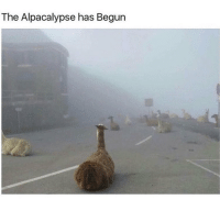 best of trendy and wishing you all the best the alpacalypse has begun