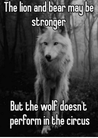 The and bear may be  be  The stronger  But the Wolf doesn't  perform in the circus
