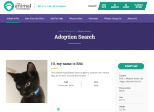 Hey Bro!: the  animal  GIVE  NOW  IN  IN  PLANNED  DONATE  All of us for all of them.  MEMORY  HONOR  GIVING  foundation  Get Pet Help  Low-Cost Vet Clinic  What's Going On  Adopt a Pet  Volunteer  About Us  Ways to Give  Home / Adopt a Pet/ Adoption Search  Adoption Search  Hi, my name is BRO  ADOPT ME!  The Animal Foundation Team is getting to know me. Please  stop by to meet me and learn more!  Location  655 N. Mojave Road Las  Vegas, Nevada 89101  Age  Sex  Estimated 14W  Male  Primary Color  Black  Size  KITTN  Weight  3.7 lbs Hey Bro!