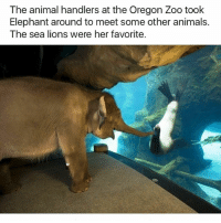 Animals, Funny, and Ted: The animal handlers at the Oregon Zoo took  Elephant around to meet some other animals.  The sea lions were her favorite. Henlo fren (@hilarious.ted)