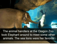Animals, Animal, and Elephant: The animal handlers at the Oregon Zoo  took Elephant around to meet some other  animals. The sea lions were her favorite